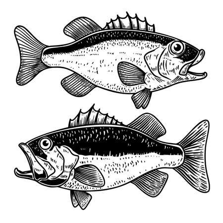 Illustration of bass fish in engraving style. Design element for label, sign, poster, t shirt. Vector illustration 矢量图像