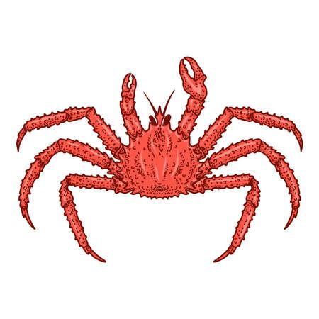 Illustration of crab in engraving style. Design element for logo, emblem, sign, poster, card, banner. Vector illustration Logó