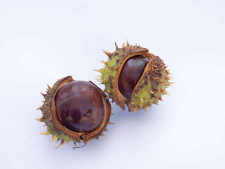 Chestnuts isolated on white background Imagens