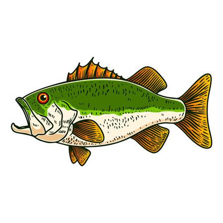 Illustration of bass fish in engraving style. Design element for poster, card, banner, sign, emblem. Vector illustration
