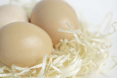 Chicken eggs in a nest of straw on white background Imagens