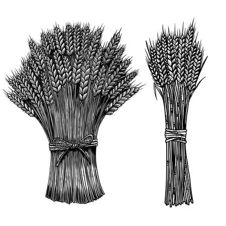 Set of Illustrations of sheaf of wheat in engraving style. Design element for poster, card, banner, sign. Vector illustration Çizim