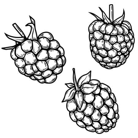 Set of illustrations of raspberry in engraving style. Design element for poster, card, banner, sign. Vector illustration Vector Illustratie