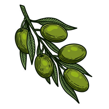 Illustration of olive branch in engraving style. Design element for logo, label, sign, emblem, poster. Vector illustration