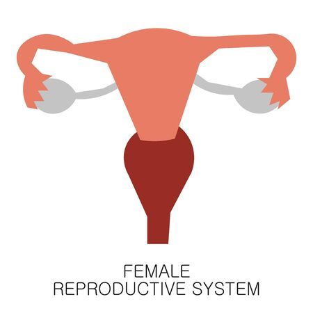 Female Reproductive System Uterus icon in flat style isolated on white background. Human anatomy medical organ vector illustration
