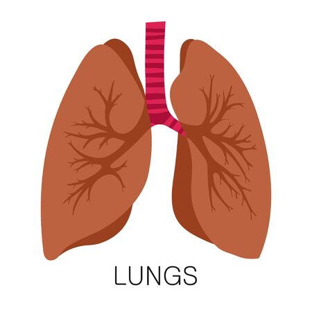 Lungs icon in flat style isolated on white background. Human anatomy medical organ vector illustration Ilustracje wektorowe