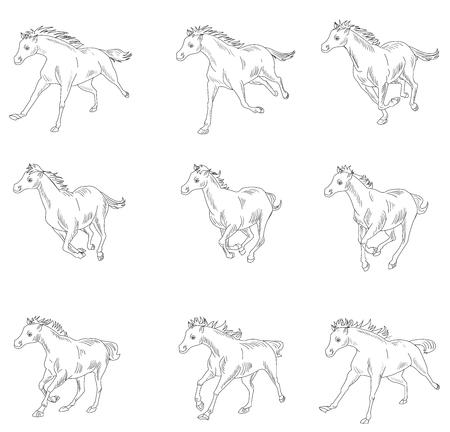 Horse run cycle animation sheet