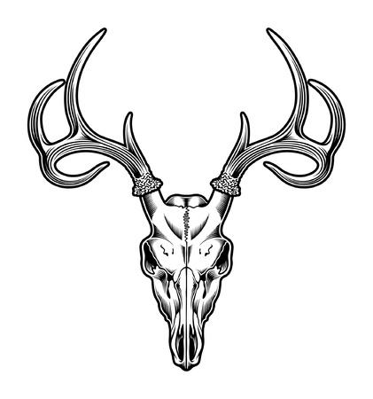 geyik: Deer Skull Vector