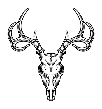 deers: Deer Skull Vector