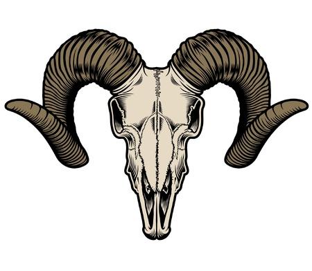 animal skull: Goat Skull Vector