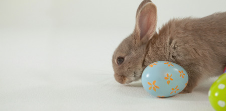 Easter egg and Easter bunny on white background