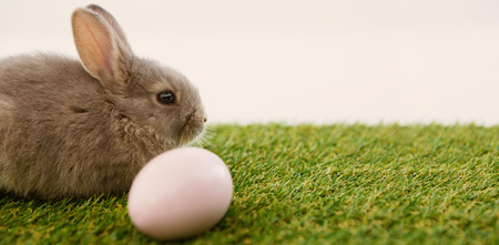 Easter egg and Easter bunny in grass on white background Stock Photo