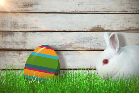 Close up of rabbit against wood background Imagens