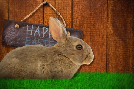Side view of cute brown rabbit  against wooden background