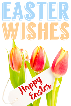Easter greeting against tulips with card Stock Photo