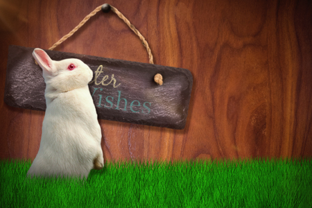 plant stand: Side view of cute rabbit  against wood background