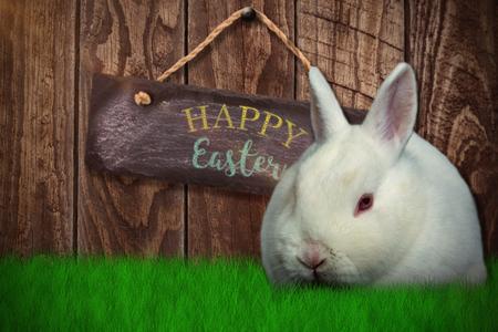 Rabbit on white background against wood panelling Stock Photo