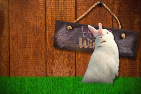 Rear view of cute rabbit  against wooden background