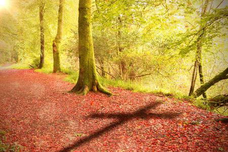 森の中の穏やかな秋のシーンに対する3d 木製クロスのクローズアップ 写真素材