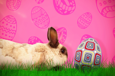 Side view of rabbit sitting against pink background