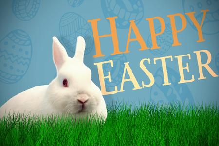 Rabbit over white background against blue background