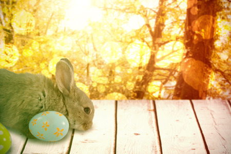 Bunny with floral pattern Easter egg against tranquil autumn scene in forest Stock Photo