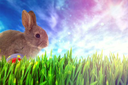 Bunny with polka dot Easter eggs against view of the blue sky Stock Photo