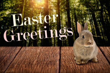 wilderness area: Easter greeting against trees in a woods