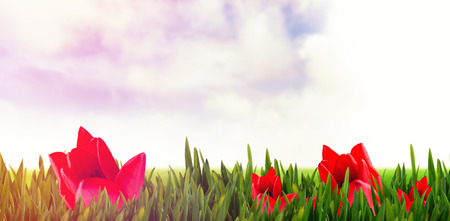 rabbit standing: Picture of a flower against meadow land against sky Stock Photo