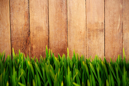 Grass growing outdoors against wood panelling Stock Photo