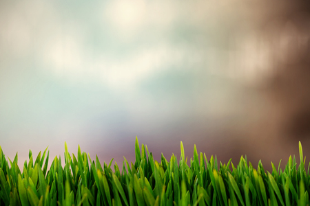 Grass growing outdoors against colored background Stock Photo