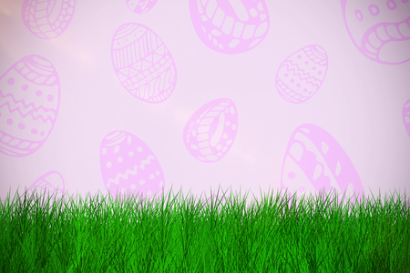 grass against white background  against purple background Stock Photo