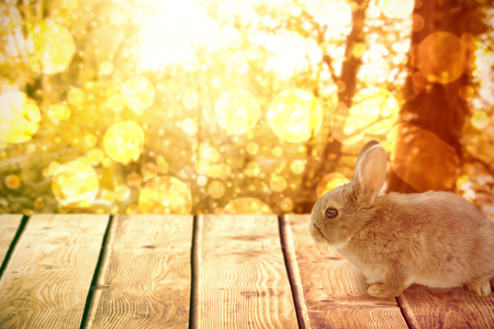 copy text: Close-up of brown Easter bunny against tranquil autumn scene in forest Stock Photo