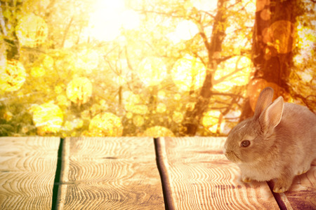 Close-up of brown Easter bunny against tranquil autumn scene in forest Stock Photo