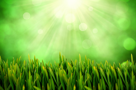 Grass growing outdoors against field against glowing lights
