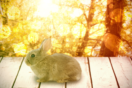 shiny floor: Close-up of bunny against tranquil autumn scene in forest Stock Photo