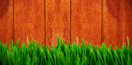 Grass growing outdoors against wooden background