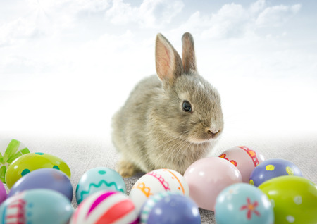 Digital composite of Easter rabbit with eggs in front of cloudy sky