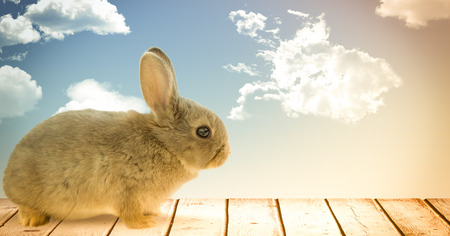 Digital composite of Easter rabbit in front of blue sky
