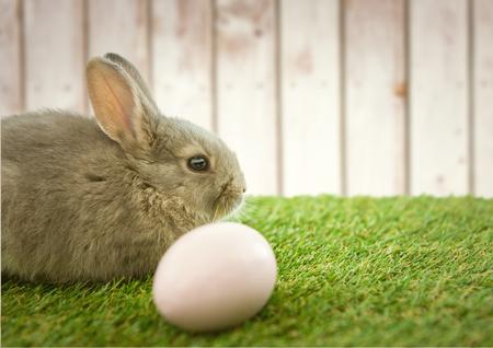 rabbit standing: Digital composite of Brown rabbit with egg in the garden