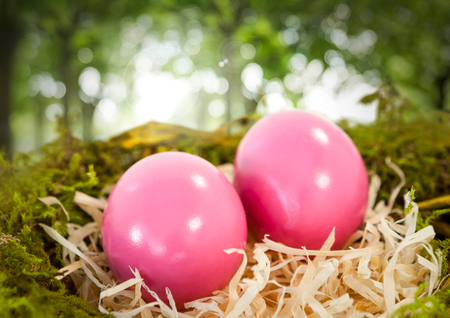 Digital composite of Easter eggs in nest in forest Stock Photo