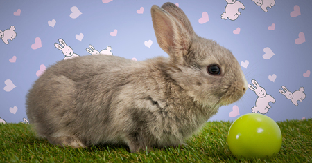 Digital composite of Easter rabbit with egg in front of pattern