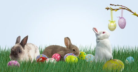 Digital composite of Rabbits and Easter eggs in the mountain