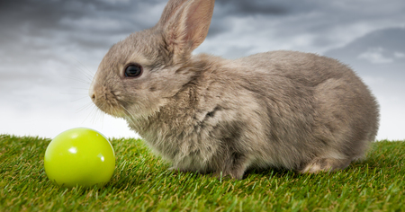 Digital composite of Easter rabbit with egg ball in front of cloudy sky Stock Photo