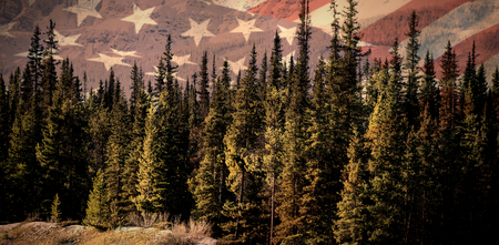 Close up of the us flag against pine trees in forest