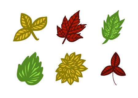 Vector icon of autumn leaves against white background