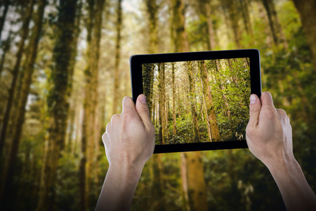 Cropped hand holding digital tablet against low angle view of trees