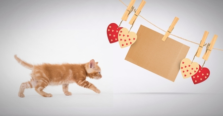 Digital composite of Kitten walking with heart and blank note on pegs Stock Photo