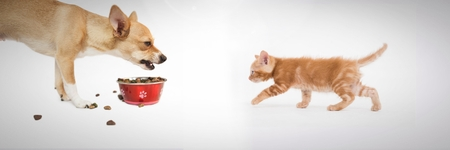 Digital composite of Grumpy dog eating and kitten