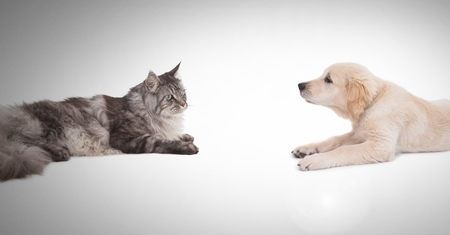 Digital composite of Cat and dog having a stare off